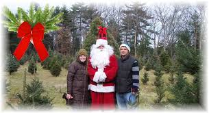 Christmas Tree Shop Middleboro Mass by Tree And Lawn Care Lakeville Ma