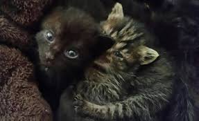100 Westcliff Park Apartments Crying Kittens Rescued From Dumpster In Fort Worth
