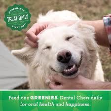 Fresh Pumpkin For Dog Diarrhea by Greenies Pumpkin Spice Flavor Teenie Dental Dog Treats 12 Oz Bag