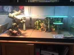 Spongebob Fish Tank Decorations by Image Result For 55 Gallon Tank Bearded Dragons Pinterest 55