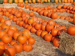 Pumpkin Picking Long Island Ny by Unimonster U0027s Crypt