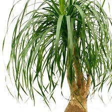 pflegeleichte und robuste zimmerpflanzen kaufen