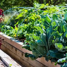 Giantex 3 Tier Wooden Elevated Raised Garden Bed Planter Kit Grow Gardening Vegetable Natural Cedar Wood 49