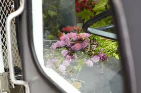 Above The Wild Bounty Inside Truck Can Seem To Overflow Its Not Unusual For Passersby Peek See Blooms Fuzzy Baby Quince Potato Sized