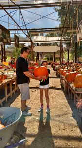 Mission Valley Pumpkin Patch by The Pumpkin Patch In Live Oak Canyon Opens 33rd Season On Oct 3rd