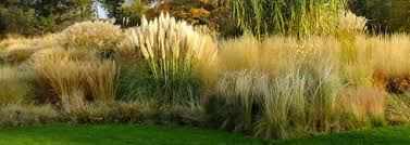 Plumes and Blooms by Santa Rosa Gardens