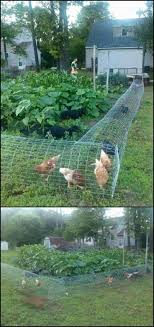 354 Best FM Chickens Images On Pinterest | Backyard Chickens ... Cheap Raising Ducks For Eggs Find Deals On The Chicken Chick 11 Tips For Predatorproofing Chickens 1064 Best Images Pinterest Chickens In The South Southern Living Keeping Ultimate Beginners Guide Australian Inrested Your Backyard Home Life How To Chickenproof Garden Modern Farmer Coop Yard Design 7 Coops 6760 Homestead Critters Landscape Gardening With 343 Other Farm Eggs