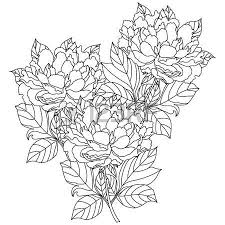 Vector Bouquet Peony Coloring Book Page For Adults Hand Drawn Artwork Love Bohemia Concept