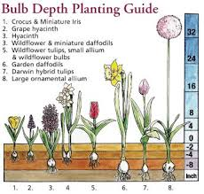 how to plant a flower bulb how to grow all things gardening