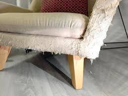 repulsif chien pour canapé canape pour canapac design pour gros et chien moyen