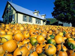 Canby Pumpkin Patch by 260 Best Fall Harvest Halloween Images On Pinterest At Home