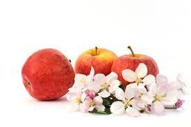 Wadsworth Ohio Christmas Tree Farm by Hillside Orchard And Farm Market U2013 Bringing Fresh Fruits And