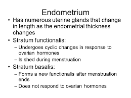 Thick Uterine Lining Shedding During Period by Uterine Lining Not Shedding During Period 28 Images