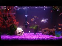 Dragon Ball Z Fish Tank Decorations by How Not To Do It This Might Be The Worst Ugliest Aquarium I U0027ve