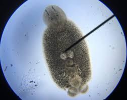 Eliminating Skin Flukes In Saltwater Fish
