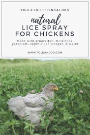 532 Best Chickens! And Ducks! Images On Pinterest | Raising ... Why Should You Compost Chicken Manure Is Naturally High In 1105 Best Backyard Project Images On Pinterest Raising Baby Chick Playground Coops Pet Chickens And Worming Backyard Controversial Here Are Tips How To Naturally Treat Coccidiosis Your Chickens Natural Treatment Of Vent Prolapse Ducks 61 To Me Raising Means Addressing Healthkeeping Deworming Homesteads