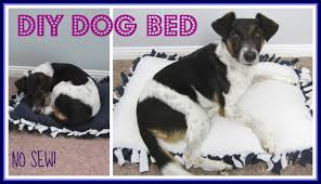Unchewable Dog Bed by Step By Step No Sew Diy Dog Bed Youtube