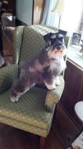 Surfshelf Treadmill Desk Canada by 28 Best Walking The Dog Images On Pinterest Walking Walking The