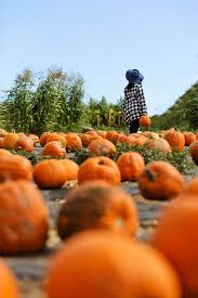 Pumpkin Patch Irvine University by The Local Guide To The Best Things To Do In Irivine California