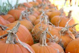 Oklahoma Pumpkin Patches by Explore Oklahoma Jahns Pumpking Hill