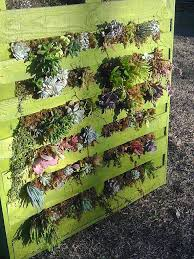 Recycled Pallet Vertical Garden Succulents