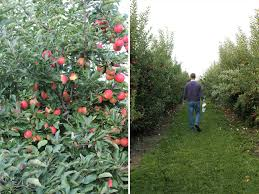 Apple Pumpkin Picking Syracuse Ny by Apple Picking In Syracuse Something Pretty