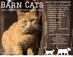 We've Got Cats For Hire! « Central Missouri Humane Society Ferals Strays And Barn Cats Cat Tales Tuesdays Fun And Aww My Moms Is Gorgeous Viralspell The Care Feeding Of Timber Creek Farm Program Buddies Seeking Support For Its Catsaving Efforts Adoption Barn Cats Near Bardstown Ky Petfinder For Green Rodent Control Turn To Barn Cats The Flying Farmers Free Images Wood Old Animal Cute Wall Pet Rural Sitting On Top Of Bales Straw Ready To Pounce Stock Weve Got Hire Central Missouri Humane Society By Jsf1 On Deviantart