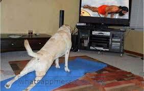 Baba Ramdev Funny Troll Dog Yoga