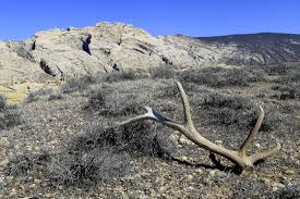 Elk Shed Hunting Utah by Category Dinosaur National Monument