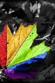 3d Art Colorful Leaf Wallpaper