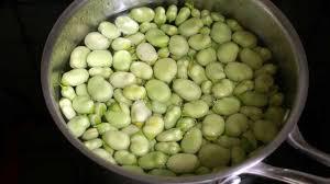 comment cuisiner les f es fraiches éplucher les fèves et cuisson des fèves recette des fèves cuites à