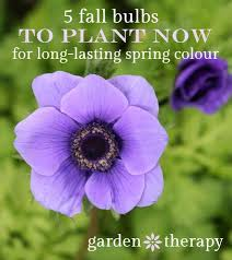 beyond tulips extraordinary fall bulbs you need to grow low