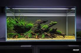 Aquascape #aquascaping #plants #hardscape | Aqua Design ... Photo Planted Axolotl Aquascape Tank Caudataorg Suitable Plants Aqua Rebell Tutorial Natures Chaos By James Findley The Making Aquascaping Aquarium Ideas From Aquatics Live 2012 Part 4 Youtube October 2010 Of The Month Ikebana Aquascaping World Public Search Preserveio Need Some Advice On My Planned Aquascape Forum 100 Cave Aquariums And Photography Setup Seriesroot A Tree Animalia Kingdom Show My Our Lovely 28l Continuity Video Gallery Green 90p Iwagumi Rock Garden Page 8