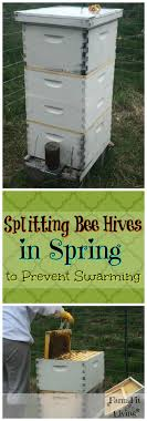 Splitting Bee Hives In Spring To Prevent Swarming | Bee Hives ... How To Keep Bees A Beginners Guide Bkeeping Deter And Wasps And Identify Which Is Family 2367 Best Homestead Animals Images On Pinterest Poultry Raising Best Bee Hives Images Photo Wonderful To Away Become A Backyard Bkeeper Fixcom Why Your Child Needs Working Bee Urban Honey Back Yard Made Simple Image On Marvellous 301 Keeping Bees 794 The Complete 7step Chickens In Plants That Simplemost