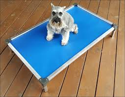 Chew Resistant Dog Bed by Living Room Awesome Dog Beds That Can U0027t Be Chewed Kong Dog Toys