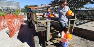 Pumpkin Patch Milwaukee by Cudahy St Francis South Milwaukee And Oak Creek Fall Things To Do