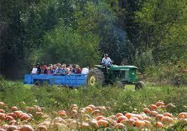 Pumpkin Patches Cincinnati Ohio Area by Shaw Farms