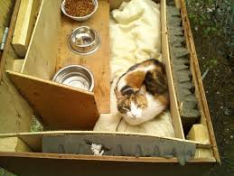 cat in house how to care for outdoor cats and barn cats set ups and supplies