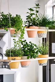 das eigene kräuterregal kräutergarten küche pflanzen
