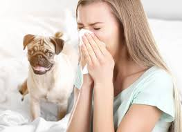 soll unser hund im bett schlafen l rinti