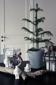 Christmas Tree Saplings Ireland by 142 Best Guest Pinner Alicia Of Dismount Creative Images On