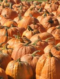 Goebbert Pumpkin Patch In Barrington Il by Welcome To Goebbert U0027s Pumpkin Patch