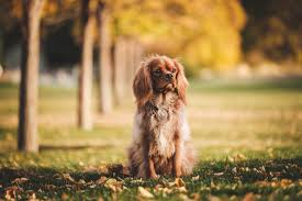 Pumpkin For Dog Constipation by Why Your Dog Will Also Benefit From The