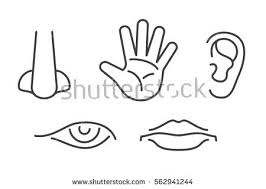 Five Senses Vector Icons Set Isolated White Human Sense Icon Illustration