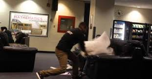 pillow fight prank Dose