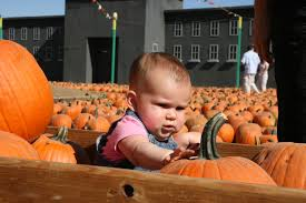 Pumpkin Patch Dixon Ca by Photo Essay Incredible Pictures Of Pumpkin Patches