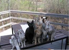 cats on deck garden