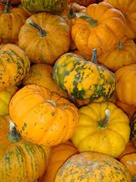 Worlds Heaviest Pumpkin Pie by Pumpkins Information And Pictures