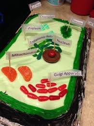 Edible plant cell cake key lime cake & candy