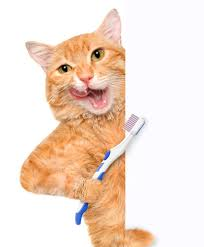 cat dental care home dental care feline wellness